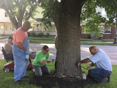 workers injecting ash trees